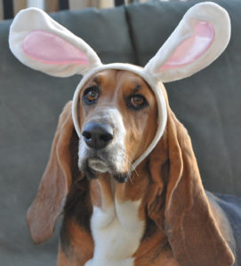 Easter Brunch with Bassets @ Central Park | Huntington Beach | California | United States