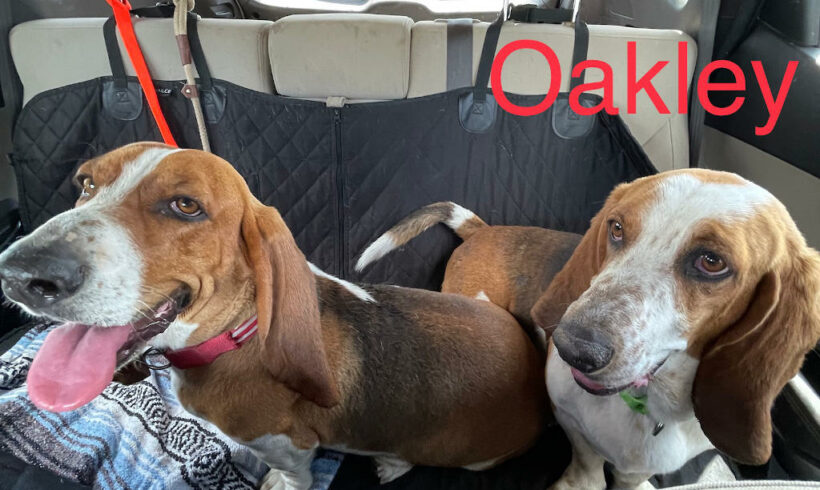 Willow and Oakley